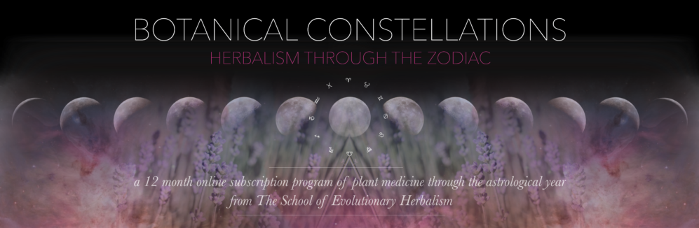 School of Evolutionary Herbalism