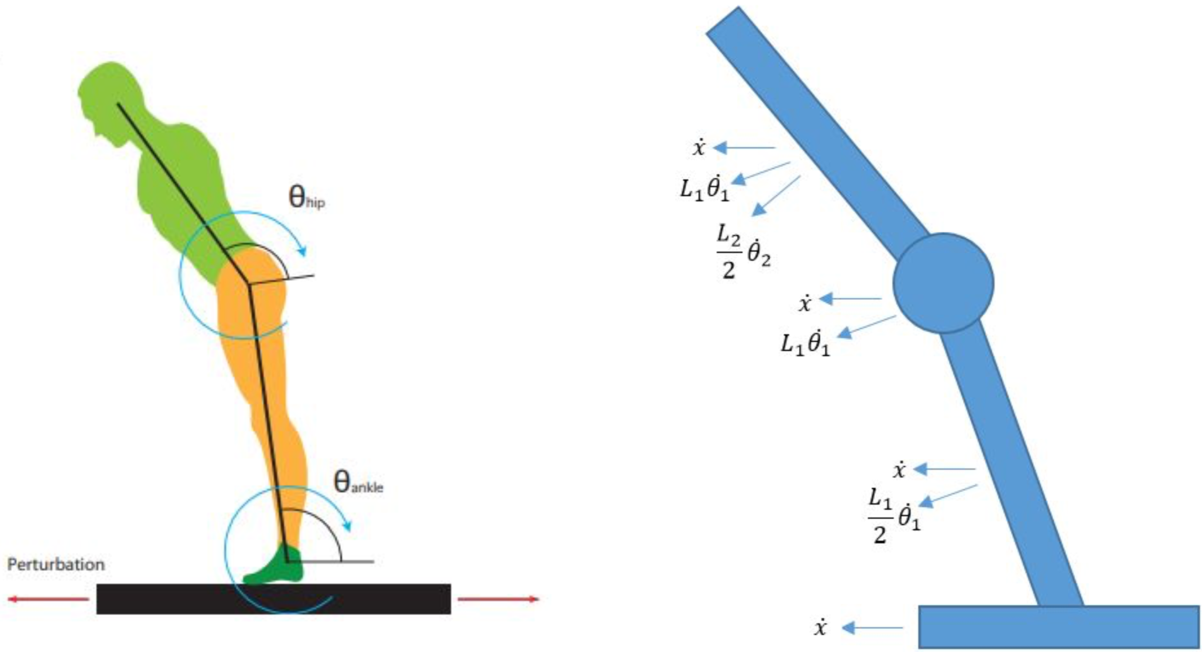 Image depicting visual model showing the dynamics of the double pendulum robot