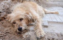 التماس: عدالة 24 كلبًا ذبحوا في مأوى للحيوانات في تونس