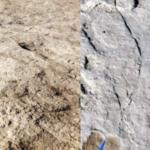 تم العثور على بقايا بشرية وحيوانية قديمة في تبوك بالمملكة العربية السعودية