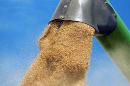 قد تنفتح الجزائر قريبًا على القمح الروسي - Algerie Eco