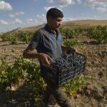 الجزائر: موجة الحر ، وفيروس كورونا ، ونقص القوى العاملة استفادت من موسم الحصاد – أوقات التعهد
