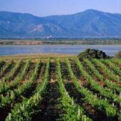 الاقتصاد: عدد كبير من المشاكل يؤثر بشدة على صانعي النبيذ الجزائريين