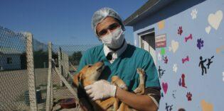 طبيب بيطري جزائري يساعد الحيوانات الضالة في مدينة تركية