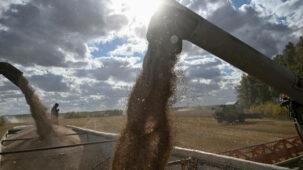 تقرير: مخاوف من انتشار الوباء وارتفاع الأسعار يدفعان البلدان إلى تخزين الغذاء