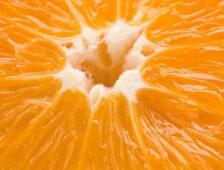 مصر تصبح أكبر مصدر للبرتقال من حيث الحجم - FreshFruitPortal.com