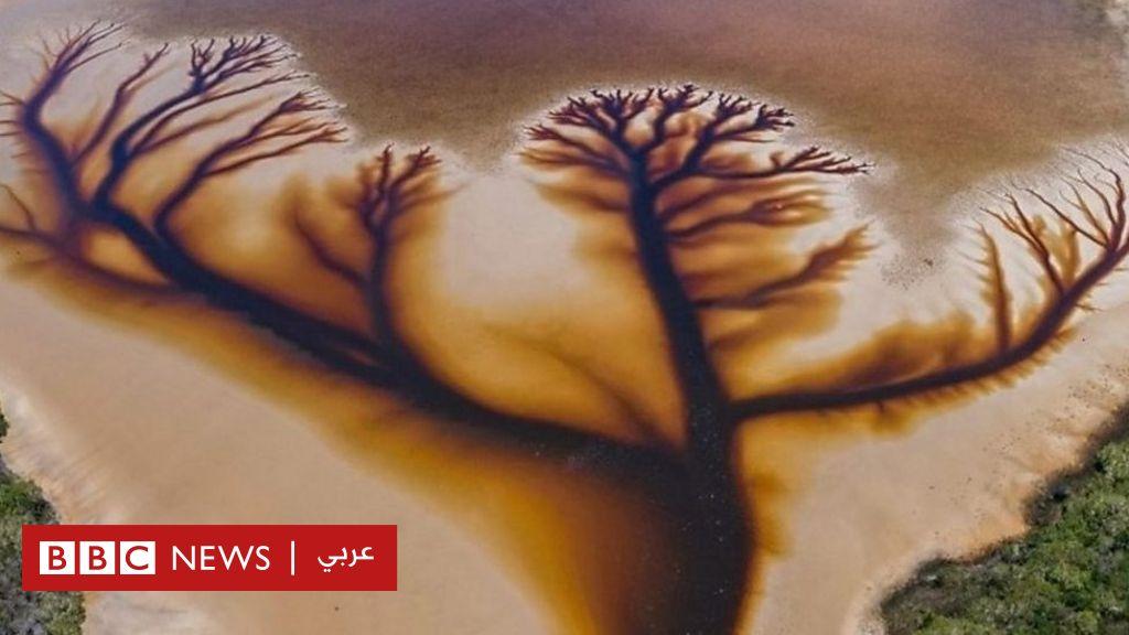 """""""شجرة الحياة"""" الغامضة التي أذهلت سكان أستراليا - BBC News عربي"""