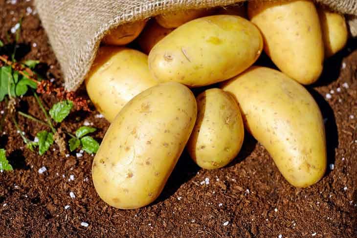البطاطس: ينتج حوالي 60٪ من البذور محلياً