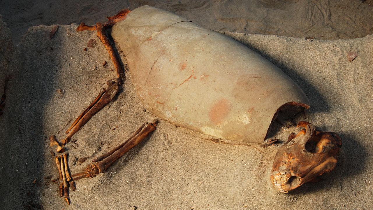 قد تكون قبور ما يقرب من 600 من القطط والكلاب في مصر القديمة أقدم مقبرة للحيوانات الأليفة في العالم